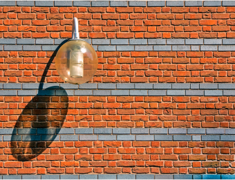 Lamo on Brick Wall