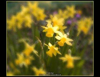 john-pugh-3-spring-glow