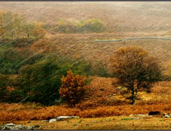 Autumn into Winter