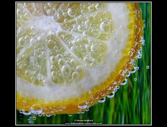 marion-shephard-fizzy-lemon-2
