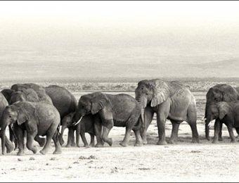 elephant parade (1)