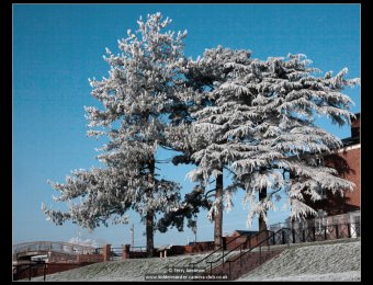 terry-jamieson-frosty-trees
